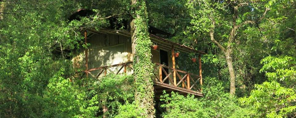 Ayar Jungle Camp,Nainital Camps, Adventure in India, Best Tree Houses In India