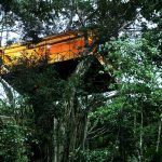 Top Three Treehouse Resorts