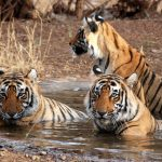 Top Five Wildlife Sanctuaries Of India